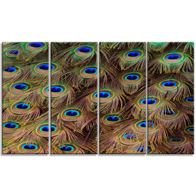 Designart Peacock Bird Tail Feathers In Close UpAnimal Canvas Art Print - 4 Panels