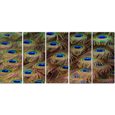 Peacock Bird Tail Feathers In Close Up Animal Canvas Art Print - 5 Panels