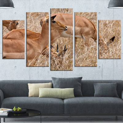Designart Grants Gazelles Grazing In Grassland Animal Wrapped Canvas Art Print - 5 Panels