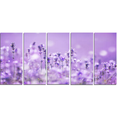 Stunning Purple Lavender Field Landscape Canvas Art Print - 5 Panels