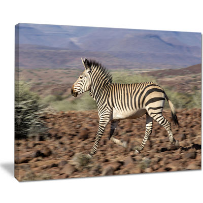 Designart Zebra in Damaraland Landscape Photography Canvas Art Print - 4 Panels