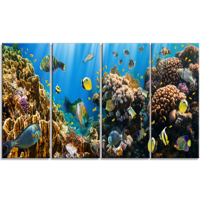 Coral Colony Panorama Photography Canvas Art Print- 4 Panels