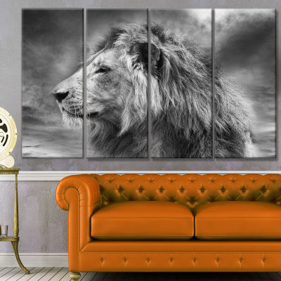 Grey Wild African Lion Animal Canvas Art Print - 4Panels