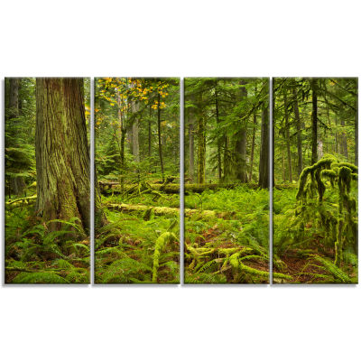 Lush Rainforest In Cathedral Grove Landscape Canvas Art Print - 4 Panels