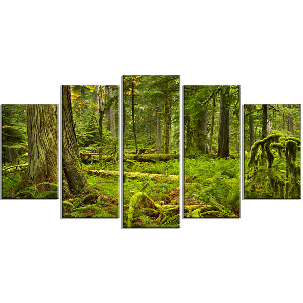 Design Art Lush Rainforest In Cathedral Grove Landscape LargeCanvas Art Print - 5 Panels