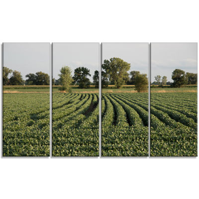 Designart Wisconsin Soybean Field Rows LandscapeCanvas Art Print - 4 Panels