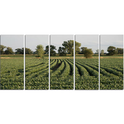 Designart Wisconsin Soybean Field Rows LandscapeCanvas Art Print - 5 Panels