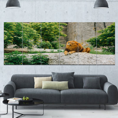 Designart Big Lion Lying On Stones In Zoo Landscape Canvas Art Print - 6 Panels