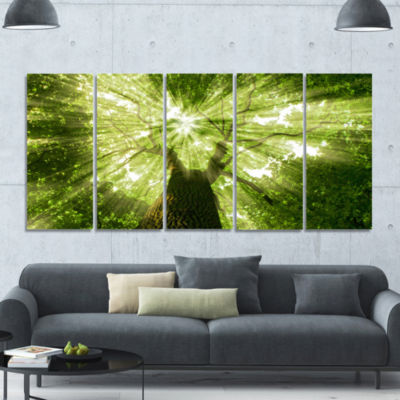 Sunlight Peeking Through Green Tree Landscape Canvas Art Print - 5 Panels
