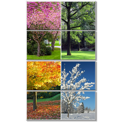 Designart Four Seasons Trees Collage Landscape Canvas Art Print - 4 Panels