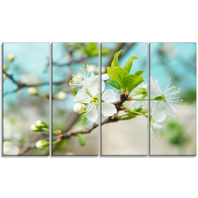 Beautiful Cherry Blossom N Spring Floral Canvas Art Print - 4 Panels