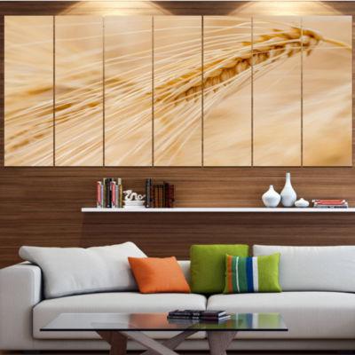 Designart Cereal Plants Barley Floral Canvas ArtPrint - 6 Panels