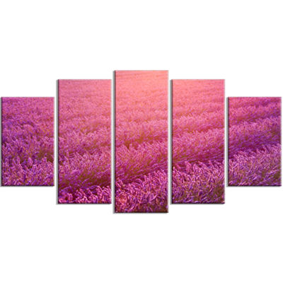 Designart Lavender Field And Ray Of Light Large Floral Canvas Art Print - 5 Panels