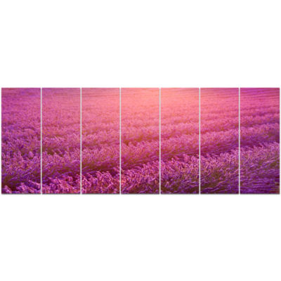 Lavender Field And Ray Of Light Floral Canvas ArtPrint - 7 Panels