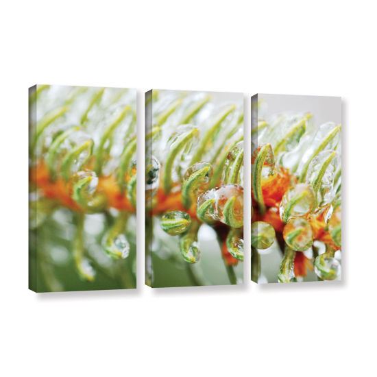 Brushstone Ice On Pine 3-pc. Gallery Wrapped Canvas Wall Art