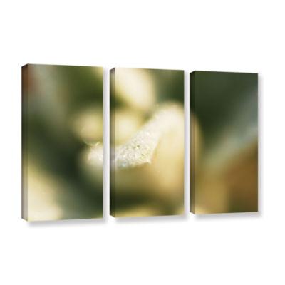 Brushstone Lamb's Ear Petal 3-pc. Gallery WrappedCanvas Wall Art