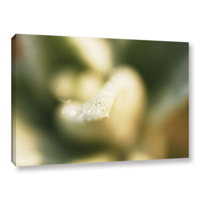 Brushstone Lamb's Ear Petal Gallery Wrapped CanvasWall Art