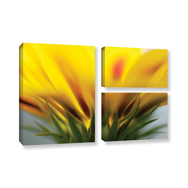 Brushstone Mexican Daisy 3-pc. Flag Gallery Wrapped Canvas Wall Art