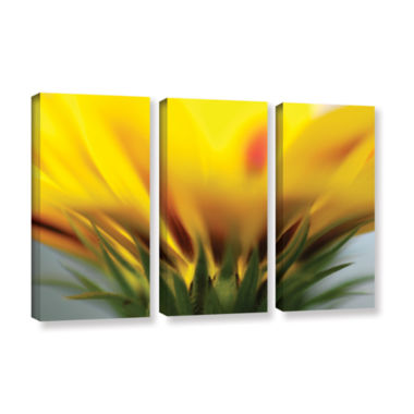 Brushstone Mexican Daisy 3-pc. Gallery Wrapped Canvas Wall Art