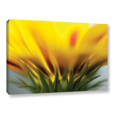 Brushstone Mexican Daisy Gallery Wrapped Canvas Wall Art