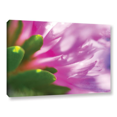 Brushstone Phlox On Edge Gallery Wrapped Canvas Wall Art