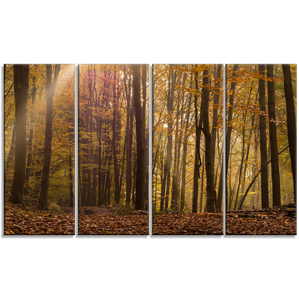 Designart Dense Forest In Rays Of Rising Sun Forest Canvas Art Print - 4 Panels