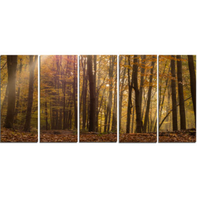 Dense Forest In Rays Of Rising Sun Forest Canvas Art Print - 5 Panels