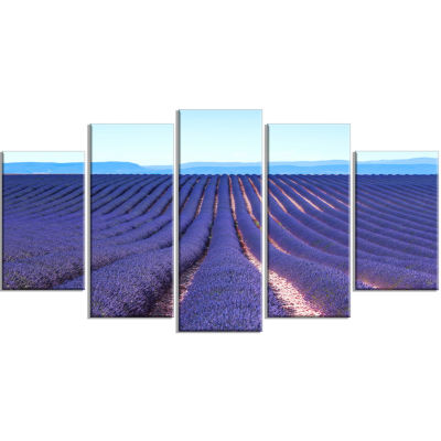 Endless Rows Of Lavender Flowers Floral Wrapped Canvas Art Print - 5 Panels
