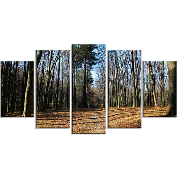 Designart Fall Forest In Sunlight And Shadows Modern ForestWrapped Canvas Art - 5 Panels