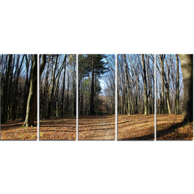 Fall Forest In Sunlight And Shadows Modern ForestCanvas Art - 5 Panels