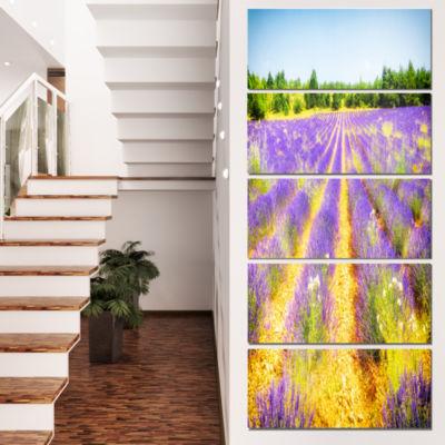 Designart Fantastic Lavender Field Of France Floral Canvas Art Print - 5 Panels