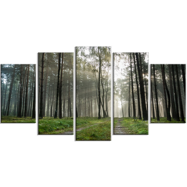 Designart Footpath In Foggy Forest At Sunset Modern Forest Wrapped Canvas Art - 5 Panels