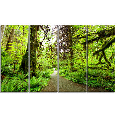 Designart Footpath In Redwood Rain Forest Landscape Canvas Art Print - 4 Panels