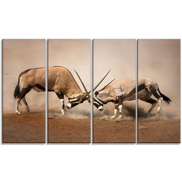 Designart Gemsbok Antelopes Fighting African WallArt Print- 4 Panels