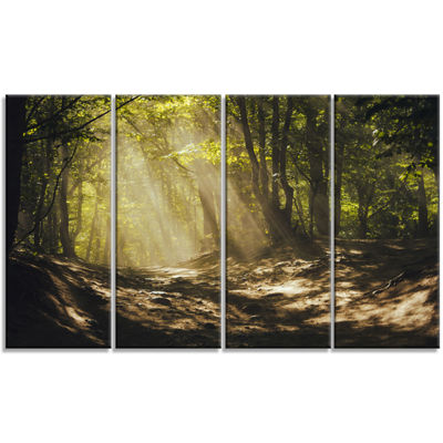 Designart Golden Morning In Dense Forest LandscapePhotography Canvas Print - 4 Panels