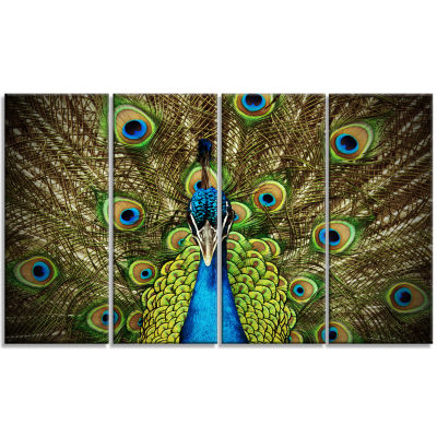 Grand Peacock Animal Photography Art - 4 Panels