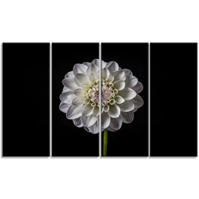 Designart Isolated Dahlia Flower In Black Floral Art CanvasPrint - 4 Panels