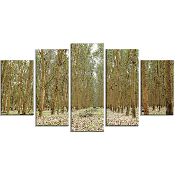 Designart Rubber Trees Row in Thailand Modern Forest WrappedArt - 5 Panels