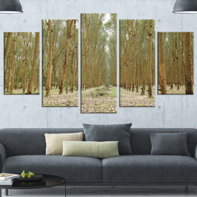 Rubber Trees Row in Thailand Modern Forest WrappedArt - 5 Panels