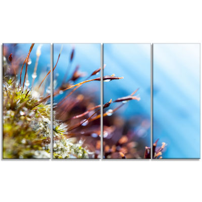 Abstract Moss Flowers in Summer Spring Landscape Canvas Art Print - 4 Panels