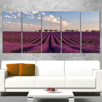 Designart Shiny Lavender Field in Provence Landscape WrappedWall Art - 5 Panels
