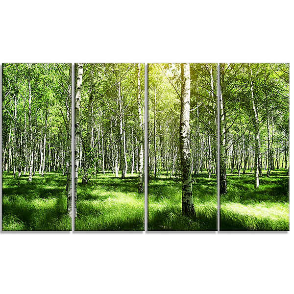 Designart Beautiful Birch Grove Landscape Art Print Canvas -4 Panels