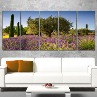 Designart Beautiful Lavender and Olive Trees LargeFlower Canvas Wall Art - 5 Panels