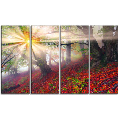 Sun in Forest After Heavy Storm Landscape Photography Canvas Print - 4 Panels
