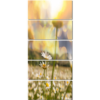 Designart Blooming Chamomiles Flowers Oversized Landscape Canvas Art - 5 Panels