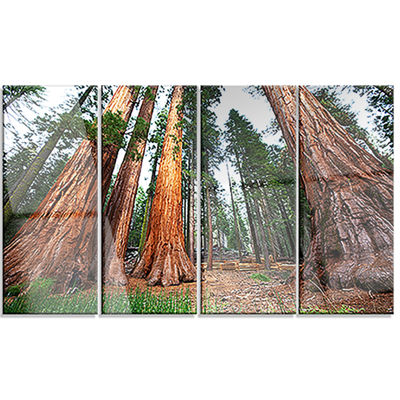 Designart Three Large Sequoya Trees African Landscape CanvasArt Print - 4 Panels
