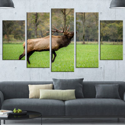 Designart Trophy Bull Elk in Green Grassland LargeAnimal Canvas Artwork - 5 Panels