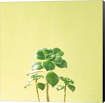 Metaverse Art Succulent Simplicity IX Canvas WallArt
