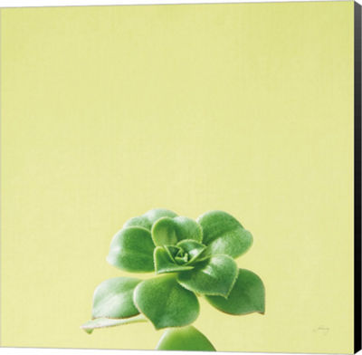 Metaverse Art Succulent Simplicity VII Canvas WallArt