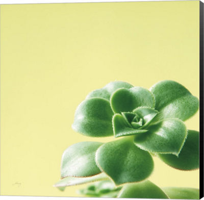 Metaverse Art Succulent Simplicity VIII Canvas Wall Art